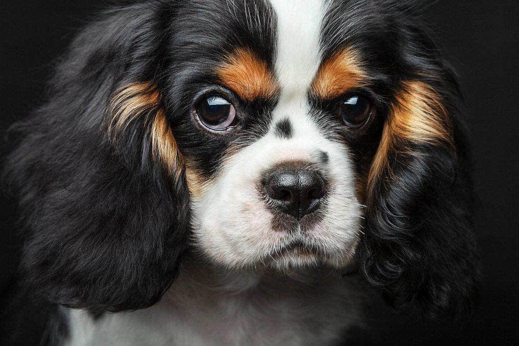Портрет собаки с характером
